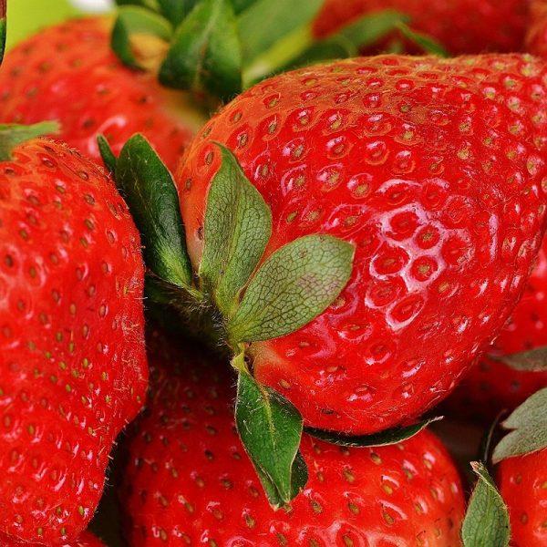 fraise-super-aliment-pour-chien