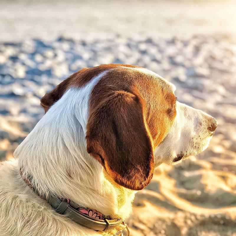 chien-danger-plage-soleil-