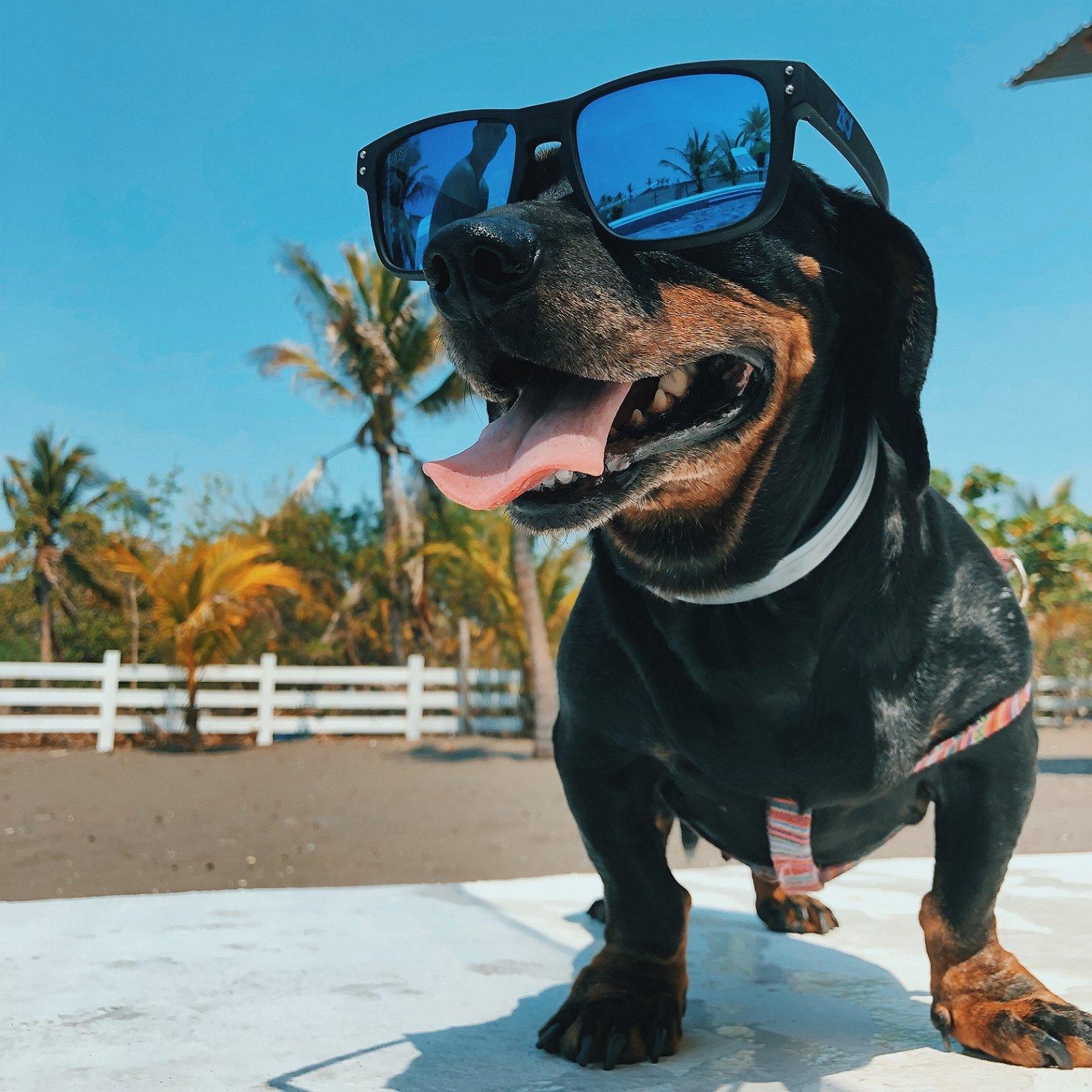 chien-vacances-été