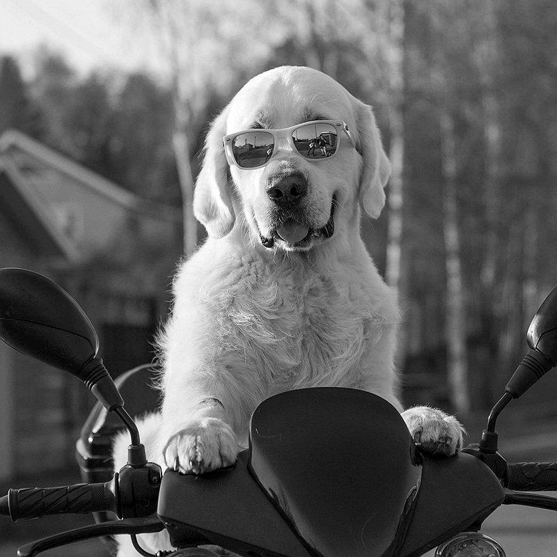 vacances-chien-voyage