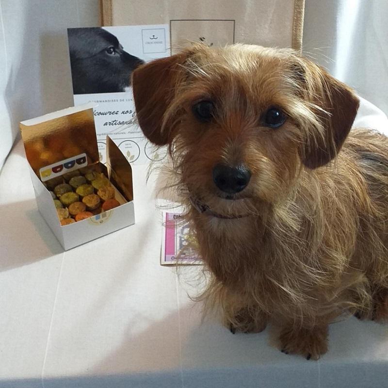 noisette-teckel-croisé-biscuits-naturels-chien-crocandiz