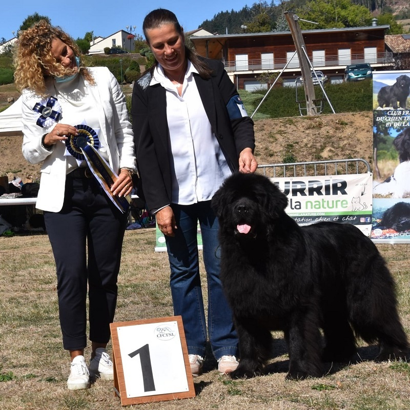 concours-canin-elevage-terre-des-ours-christine-Lohtse
