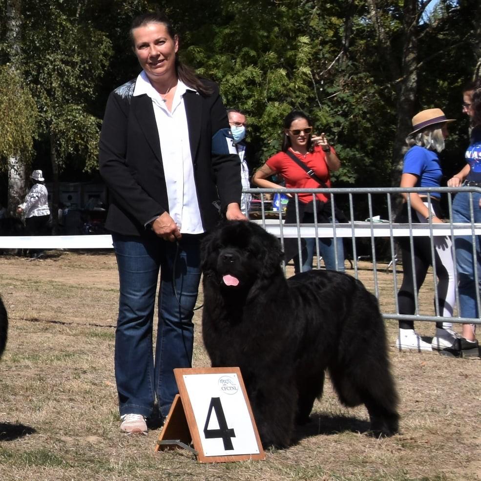 Concours-canin-terre-des-ours-elevage-terre-neuve-christine-Lohtse