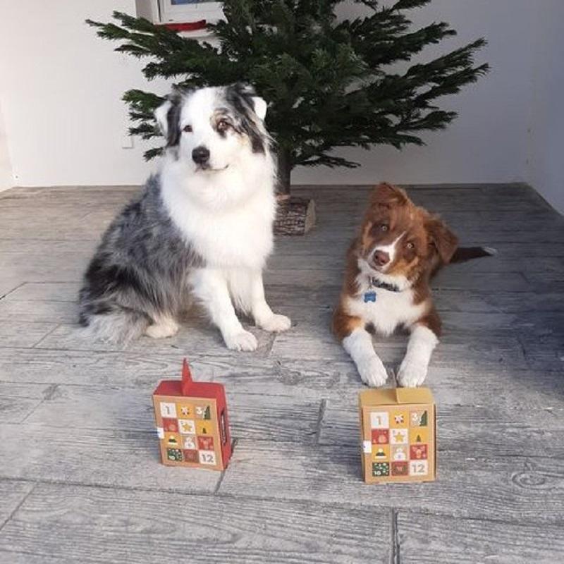 lolly-et-Ruben-club-chiens-crocandiz